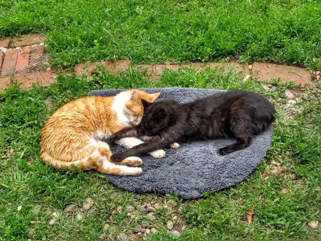 Mačke spavaju